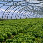 Υποστήριξη Αγροτικών επενδύσεων και επιδοτήσεων