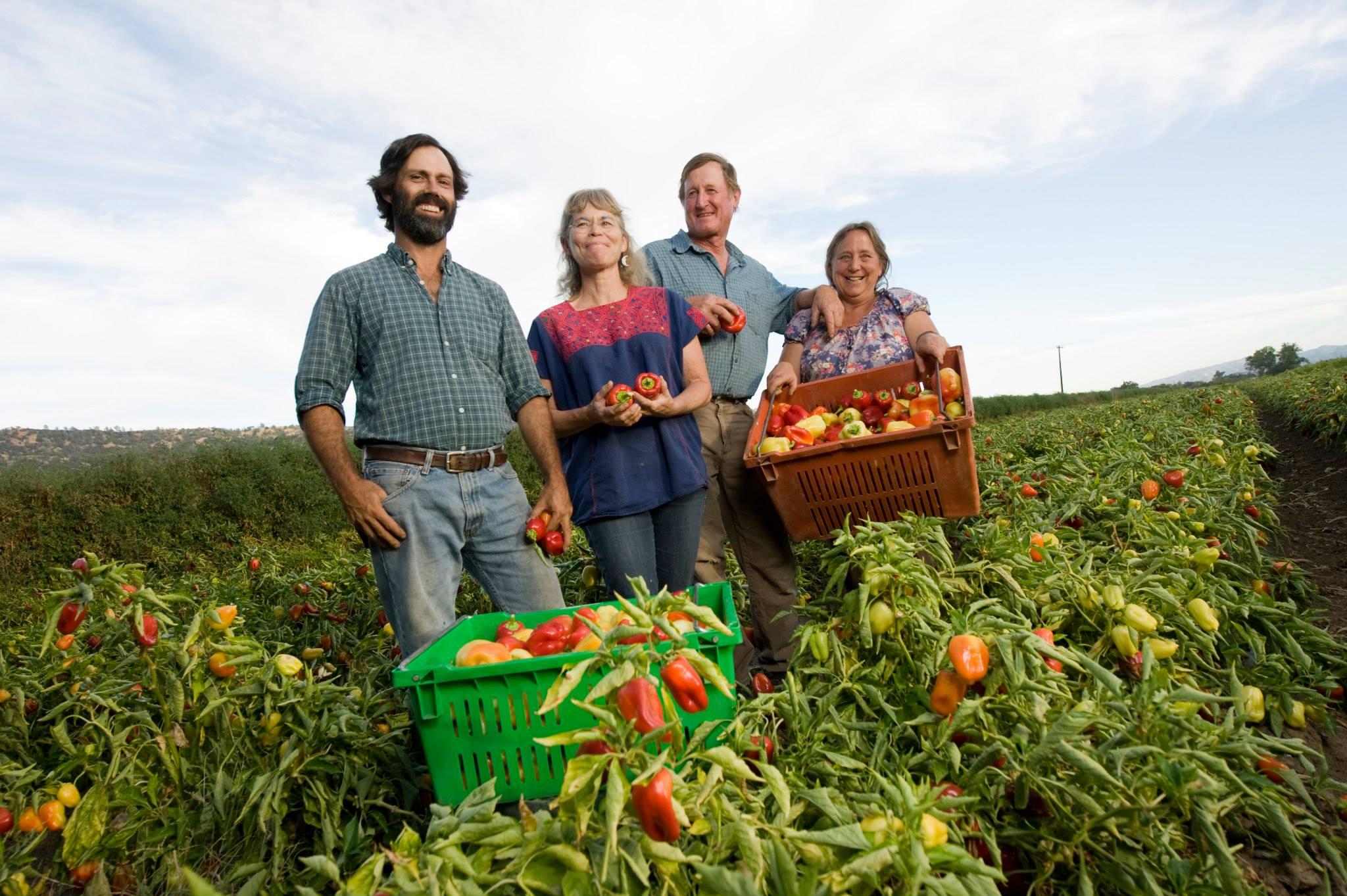Αγροτικές-επιδοτήσεις-Ενισχύονται-Ιδρύσεις-Εκσυγχρονισμοί