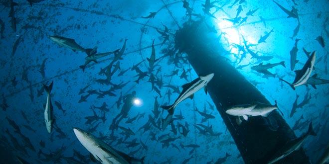 Προδημοσίευση πρόσκλησης Καινοτομία στην Αλιεία